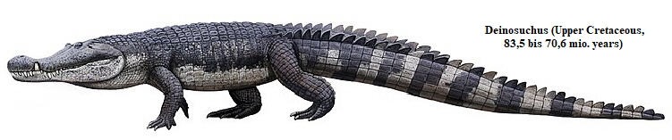 Drawing of a Deinosuchus walking, again very similar to a modern crocodile.