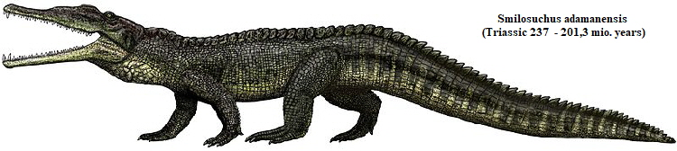 Drawing of a Smilosuchus adamanensis. Very similar to a modern crocodile.